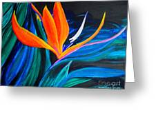 Eastcoast Bird Of Paradise Greeting Card