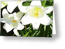 Easter Lilies At Longue Vue Greeting Card by Katie Spicuzza
