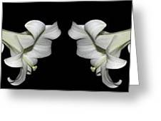 Easter Lilies Panorama Greeting Card
