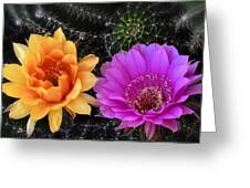 Easter Lilly Cactus Flowers  Greeting Card
