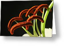Easter Lily Detail Greeting Card