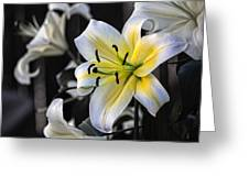 Easter Lily On Black Greeting Card