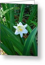 Easter Lily Greeting Card