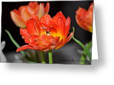 Easter Parrot Tulips Greeting Card