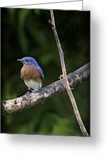 Eastern Blue Delight Greeting Card