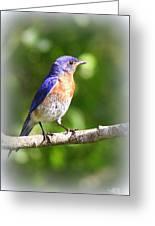 Eastern Bluebird - After His Bath Greeting Card