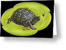 Eastern Box Turtle On Yellow Lily Greeting Card