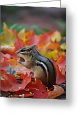Eastern Chipmunk Greeting Card