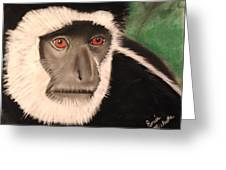 Eastern Colobus Monkey Greeting Card