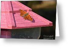 Eastern Comma Butterfly On Bird Feeder  Greeting Card
