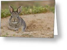 Eastern Cottontail Wyoming Greeting Card