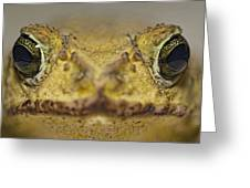 Eastern Giant Toad Greeting Card