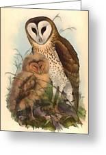 Eastern Grass Owl Greeting Card