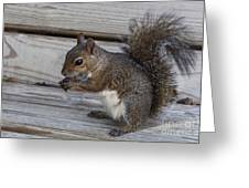 Eastern Gray Squirrel-4 Greeting Card