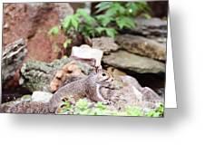 Eastern Grey Squirrel  Greeting Card