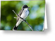 Eastern Kindbird  Greeting Card