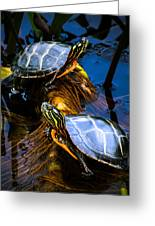 Eastern Painted Turtles Greeting Card