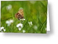 Eastern Pine Elfin Butterfly Greeting Card