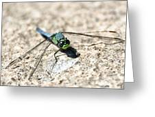 Eastern Pondhawk Greeting Card