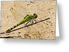 Eastern Pondhawk Dragonfly Greeting Card
