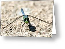Eastern Pondhawk Front Greeting Card