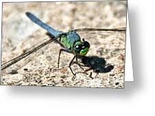 Eastern Pondhawk Side Greeting Card