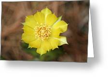 Eastern Prickly Pear Cactus Greeting Card