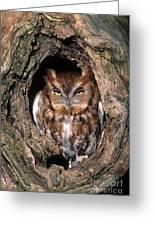 Eastern Screech Owl - Fs000810 Greeting Card
