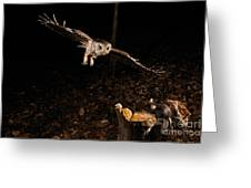 Eastern Screech Owl Hunting Greeting Card
