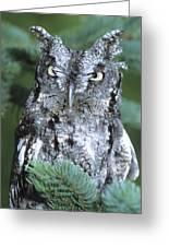Eastern Screech Owl In Tree Greeting Card