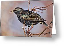 Common Starling Greeting Card