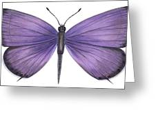 Eastern Tailed Blue Butterfly Greeting Card by Anonymous