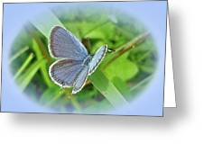 Eastern-tailed Blue Butterfly - Cupido Comyntas Greeting Card