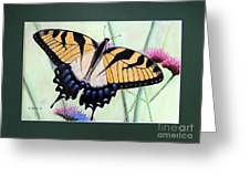 Eastern Tiger Swallowtail Butterfly By George Wood Greeting Card