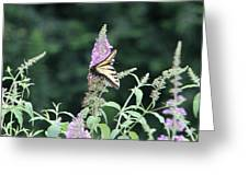 Eastern Tiger Swallowtail Butterfly -  Featured In Wildlife Group Greeting Card