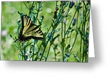 Eastern Tiger Swallowtail Ins 76 Greeting Card