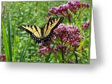 Eastern Tiger Swallowtail On Joe Pye Weed Greeting Card