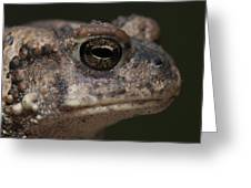 Eastern Toad Detail Greeting Card