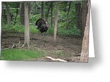 Eastern Tom Turkey Greeting Card