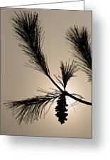 Eastern White Pine Greeting Card