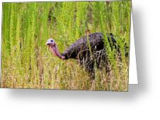 Eastern Wild Turkey - Longbeard Greeting Card