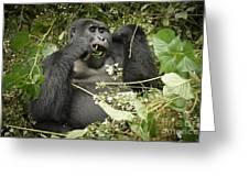 Eating Mountain Gorilla Greeting Card