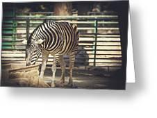 Eating Zebra Greeting Card