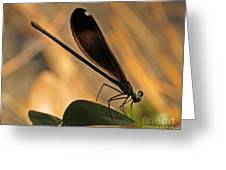 Ebony Damselfly Greeting Card