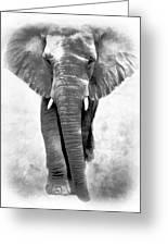 Ebony Ivory African Elephant Greeting Card