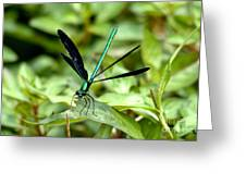Ebony Jewelwing Greeting Card