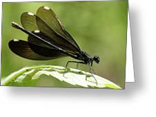 Ebony Jewelwing Fluttering For Male Greeting Card
