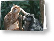 Ebony Langurs Greeting Card