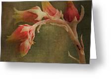 Echervia Blossom Greeting Card by Pam Vick
