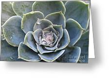 Echeveria With Water Drops Greeting Card